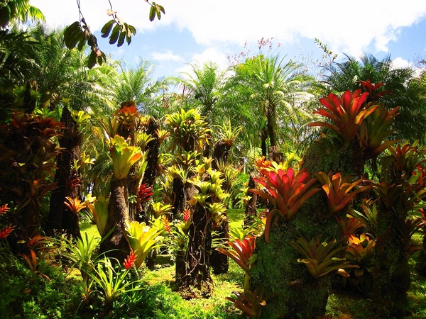 тропический лес с имбирем